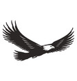 monochrome flying eagle template vector image