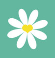 white chamomile daisy cute flower plant vector image vector image