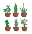 cartoon indoor plants vector image