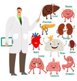 cute doctor and human internal organs vector image vector image