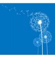 dandelion on blue vector image