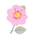 pink camellia japonica semi double form flower vector image vector image