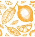 seamless pattern with citrus fruits on a white vector image