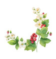 watercolor wreath jasmine and red vector image