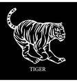 wild tiger vector image