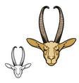 gerenuk gazelle african antelope animal vector image vector image