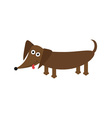 Dachshund dog breed with tongue Cute cartoon vector image