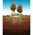 Mushroom growing from underground vector image vector image