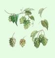 watercolor hop flowers set vector image