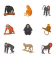 different kinds of monkeys icons set vector image