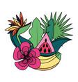 banana watermelon flower tropical fruits foliage vector image vector image