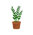 green leafy home decorative plant for interior vector image vector image