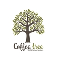 Hand drawn graphic coffee tree vector image vector image