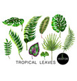 tropical palm monstera banana and fern leaves vector image