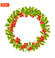 wreath of berries and leaves of lingonberry plant vector image vector image