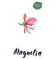 flower of magnolia watercolor vector image vector image
