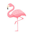 pink flamingo exotic tropical bird with bright vector image