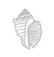 sea shell isolated vector image vector image