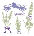 Set of silhouettes of lavender flowers vector image vector image