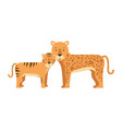 wild tiger and leopard vector image