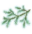Frozen fir branch vector image vector image