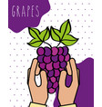 hands fresh grapes nature drawn image dotted vector image