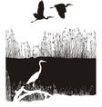 Herons on the river vector image vector image