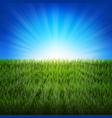 nature sunburst background with green grass vector image vector image