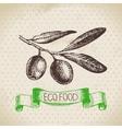 Hand drawn sketch olive vegetable Eco food vector image vector image