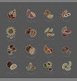 icon and logo for nuts and seeds editable vector image