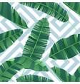 seamless pattern tropical banana leaves on vector image vector image