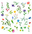 watercolor doodle plants and flowers vector image vector image