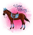 horse in equestrian equipment vector image