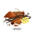 realistic spices set vector image