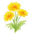 three yellow flowers eps10 vector image vector image