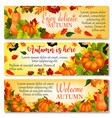 autumn banner with pumpkin fallen leaves berry vector image vector image