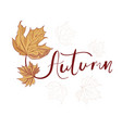 hand drawn lettering phrase autumn vector image