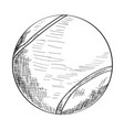 sketch of a tennis ball vector image vector image