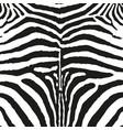 zebra skin print black and white vector image vector image