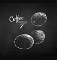 chalk drawn sketch whole coffee berries vector image vector image