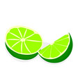 limes on a white background vector image