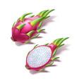 realistic pitahaya dragon fruit pitaya 3d vector image vector image