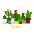 cactus succulents in pots isolated vector image vector image