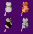 set of stylized icons in form of cats vector image