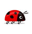 sweet red lady bug vector image