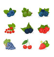 berries fruit with names set vector image