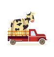 farming and agriculture concept with large cow in vector image vector image