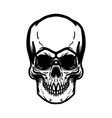 hand drawn human skull on white background design vector image