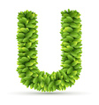 Letter U alphabet of green leaves vector image vector image