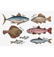 Seafood Collection of fish such as tuna trout vector image